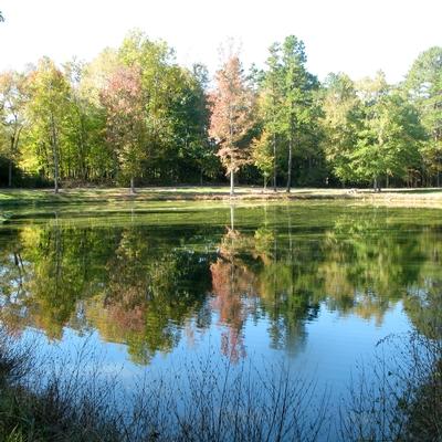 Land Lab pond